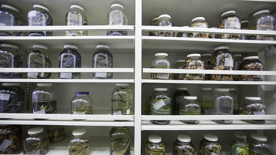<p>Estante de serpentes no laboratório de herpetologia do Instituto Butantan. O prédio de coleções zoológicas foi reinaugurado após um incêndio que destruiu parte do acervo em 2010</p>