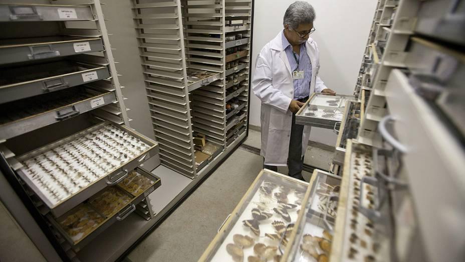 <p>Pesquisador do laboratório de entomologia do Instituto Butantan, Roberto Henrique Moraes, observa uma amostra de borboletas</p>