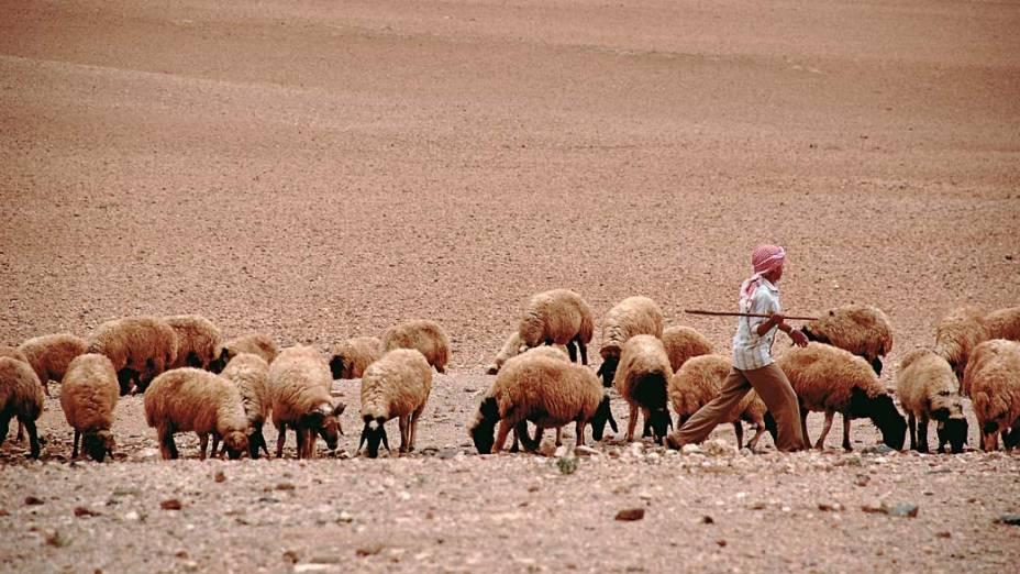 Menino pastorando ovelhas em Palmira, Síria