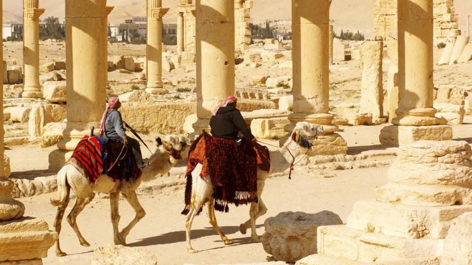 Camelos na cidade antiga de Palmira, Síria