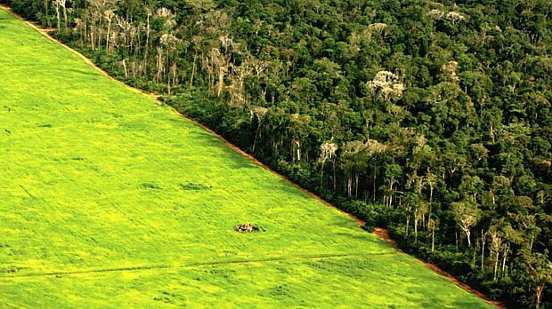 desmatamento-amazonia-greenpeace-original.jpeg