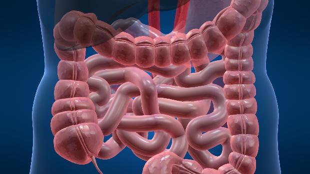 doenca-celiaca-intestino-20110804-original.jpeg