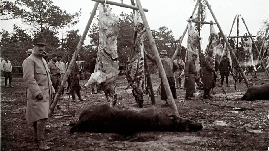 Animais que seriam preparados para alimentar as tropas no front de Champagne, leste da França