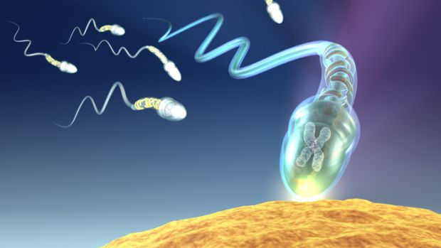 esperma-20130201-original.jpeg