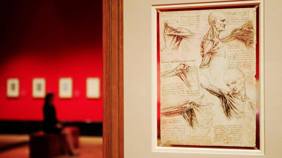 """<p>Desenho de Leonardo da Vinci """"os músculos do ombro"""", feito entre 1510-11 em exposição na Queens Gallery no Palácio de Buckingham, Londres</p>"""