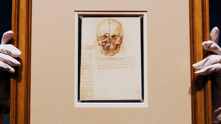 """<p>Funcionário posa com desenho artista Leonardo da Vinci """"Um crânio seccionado, 1489"""" na Queens Gallery no Palácio de Buckingham em Londres</p>"""