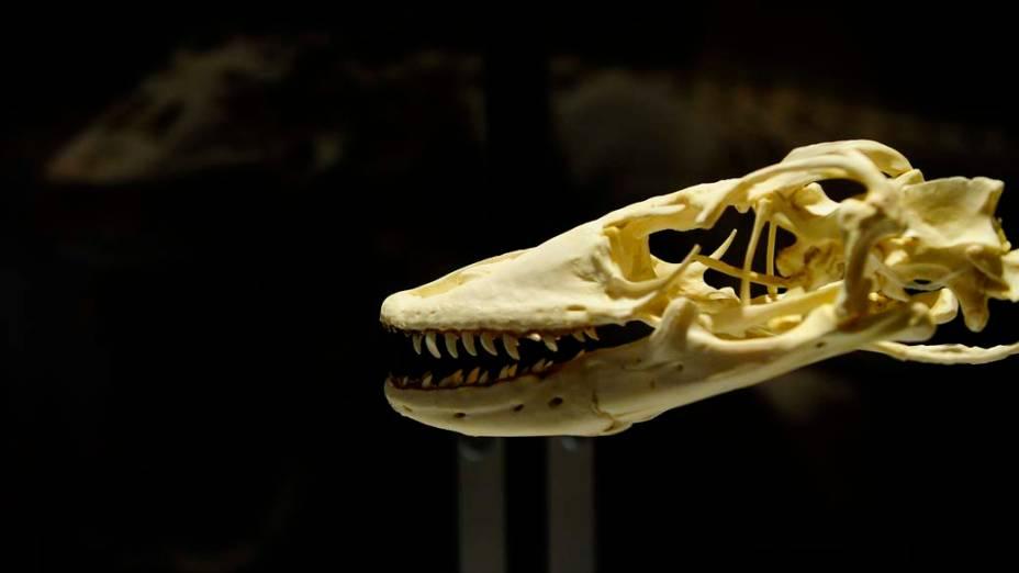 """<p>Esqueleto de um dinossauro na exposição """"Os Maiores Dinossauros do Mundo"""", em Nova York</p>"""