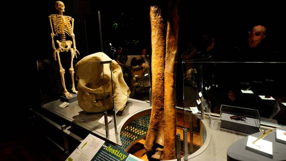 """<p>Exposição """"Os Maiores Dinossauros do Mundo"""", em Nova York</p>"""
