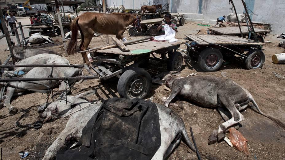 Dezenas de animais foram mortos durante um ataque aocampo de refugiados de Jabalia, no norte da Faixa de Gaza, em 30/07/2014