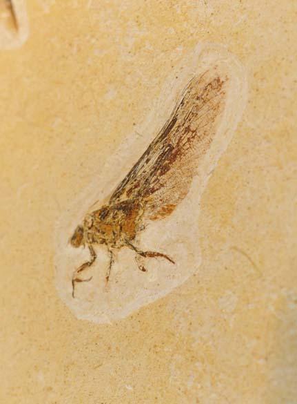 <p>Há 120 milhões de anos, no início do Peíodo Cretáceo, alguns insetos eram assim</p>