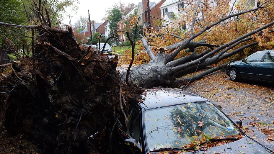 Árvores caídas nesta manhã em Washignton causado pela passagem do furacão Sandy