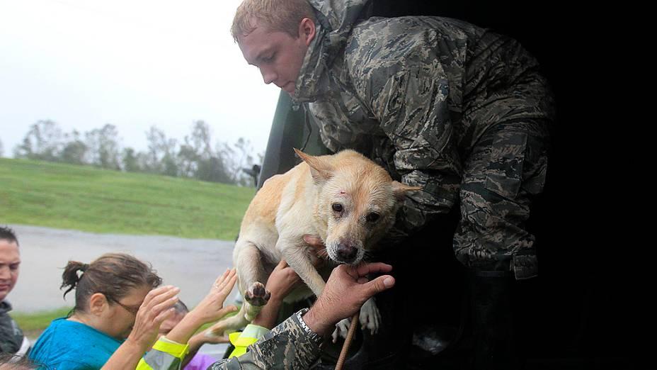 Pessoas e un cachorro, são resgatados pela Guarda Nacional de Louisiana após a passagem do furacão Isaac