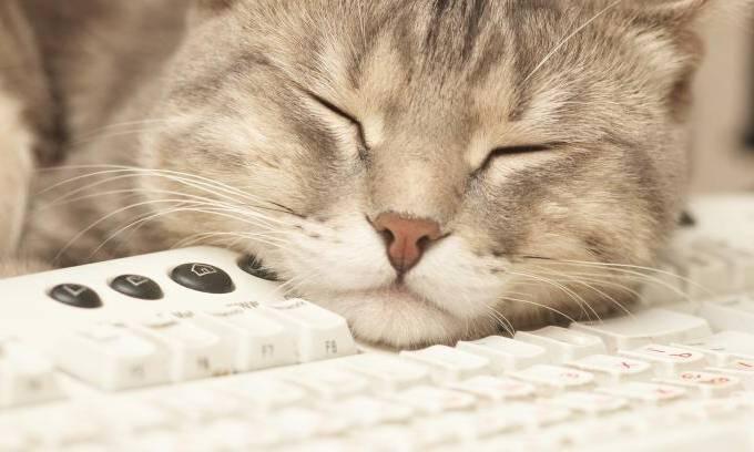 gato-computador-20130410-original.jpeg