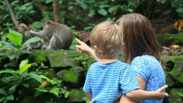 humanos-macacos-20131011-original.jpeg