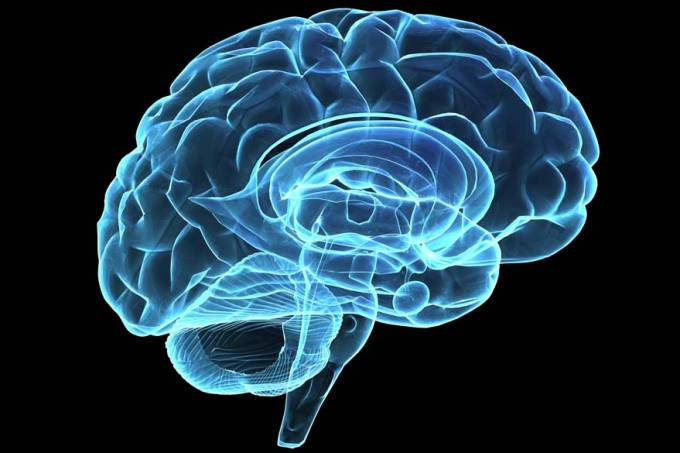 ilustracao-cerebro-raio-x-02-original.jpeg