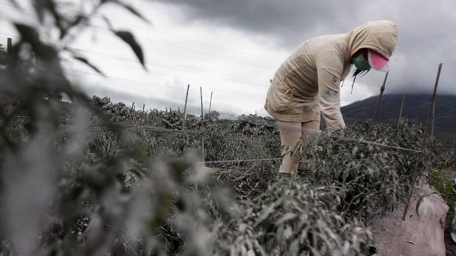 <p>Agricultor tenta recuperar campo coberto de cinzas após a erupção do vulcão Sinabung, na Indonésia, nesta sexta-feira (08)</p>