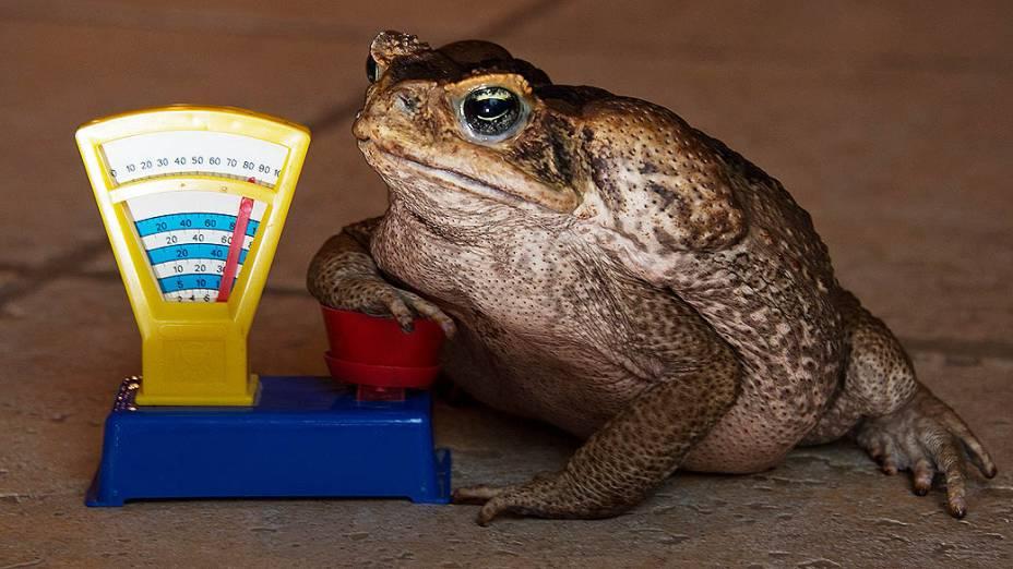 <p>Animais são pesados e medidos no Zoológico de Hanover</p>