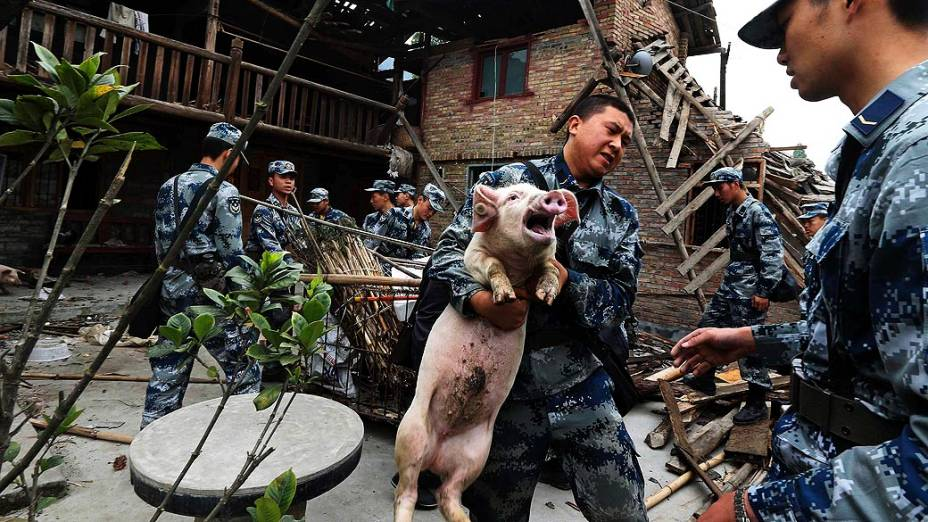 Equipes de resgate carregam um porco para fora de uma casa destruída pelo terremoto que atingiu o condado de Lushan, na província de Sichuan, China
