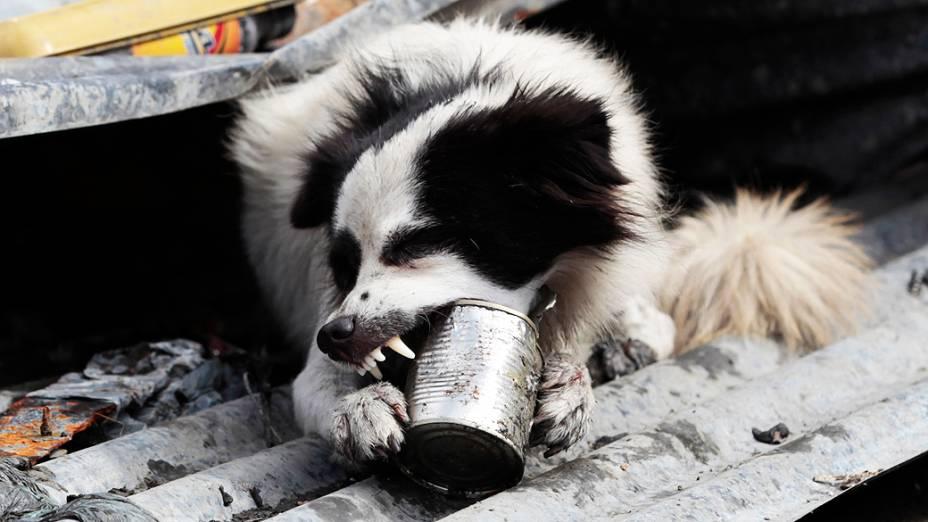 Um cão procura por comida na cidade de Tacloban<br>