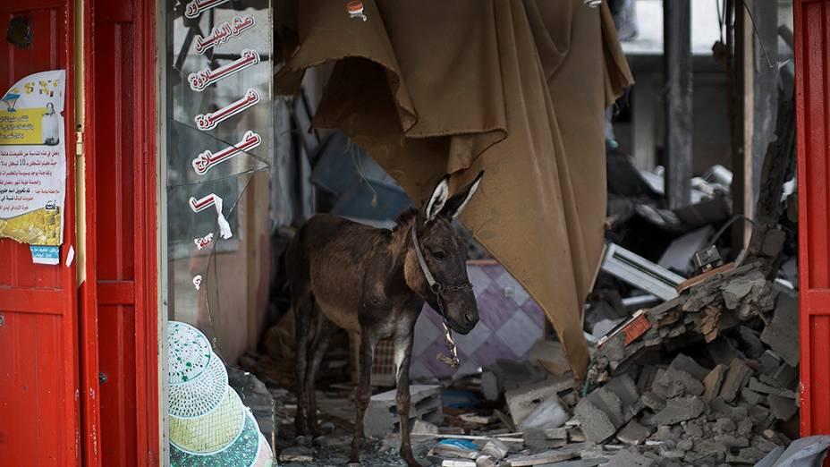 Um burro anda dentro de uma loja destuída na Faixa de Gaza