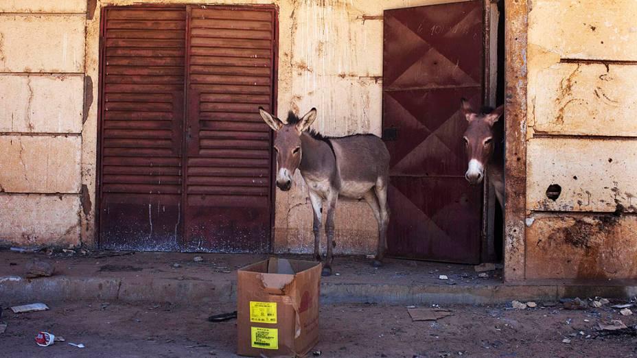 Burros ficam na entrada de um acampamento militar em Diabaly, Mali
