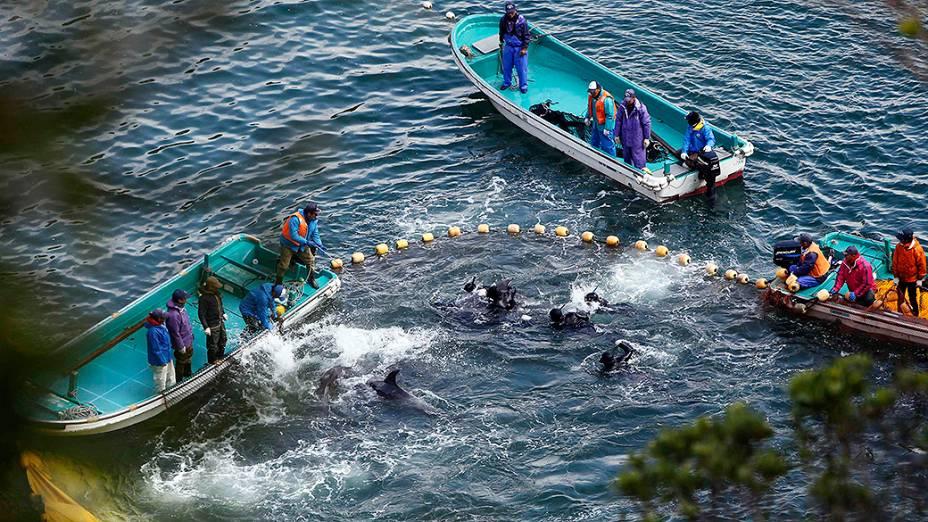 Pescadores são flagrados realizando a caça de golfinhos em uma enseada de Taiji, no Japão