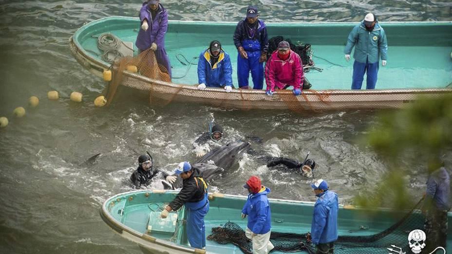 Dos animais encurralados, 52 foram separados para venda e 40 mortos para consumo