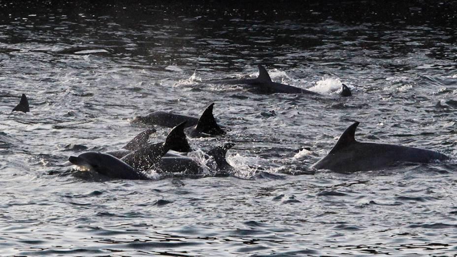 Segundo a Sea Sheperd, o grupo capturado na última sexta-feira foi o maior desde que a organização monitora a atividade
