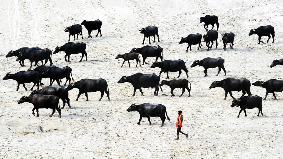 Pastor de búfalos caminha em um leito de rio seco em Allahabad. Milhões de agricultores contam com as chuvas para irrigar suas terras, na Índia