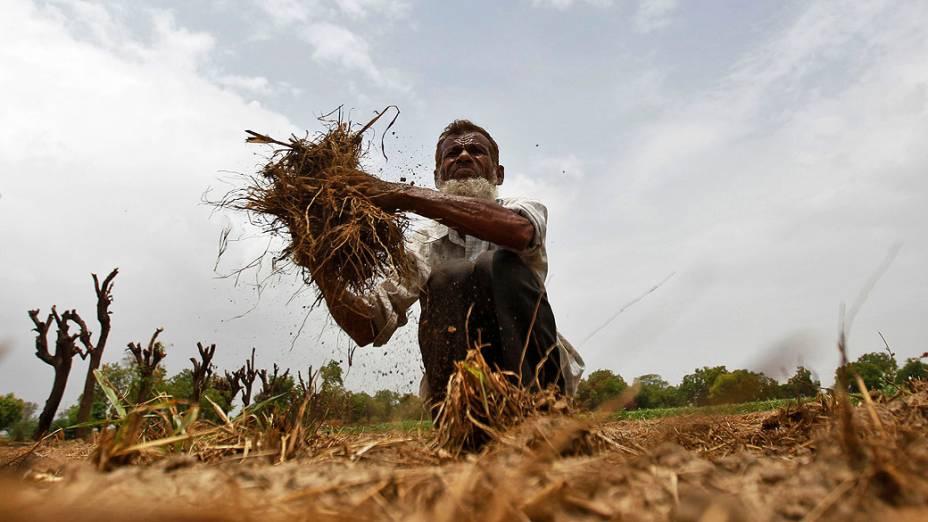 Fazendeiro remove grama seca de seu campo de arroz durante pré-monção nos arredores da cidade de Ahmedabad, na Índia
