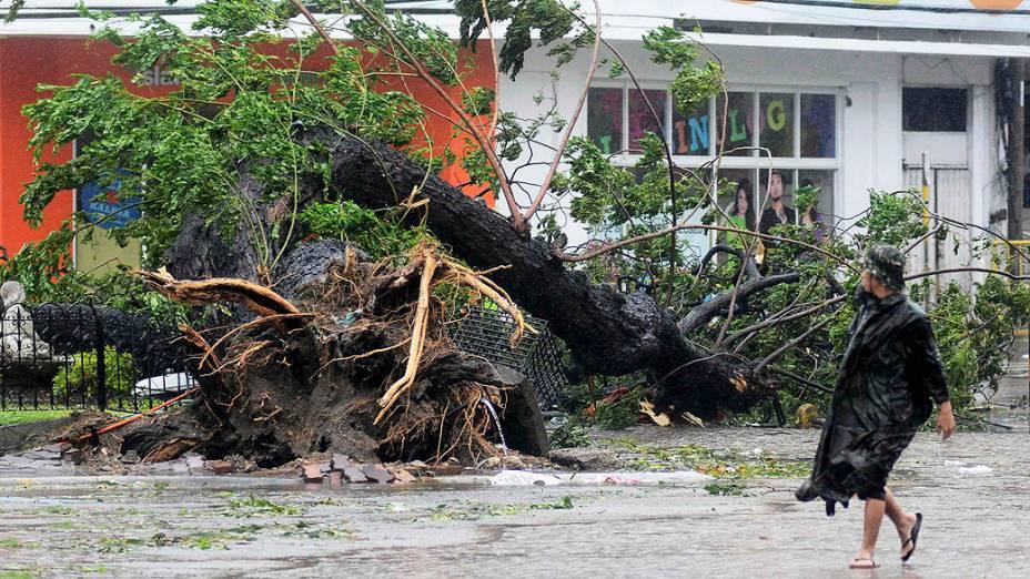 Homem passa por uma árvore arrancada pelos fortes ventos trazidos pela tufão Haiyan, na cidade Cebu, região central das Filipinas