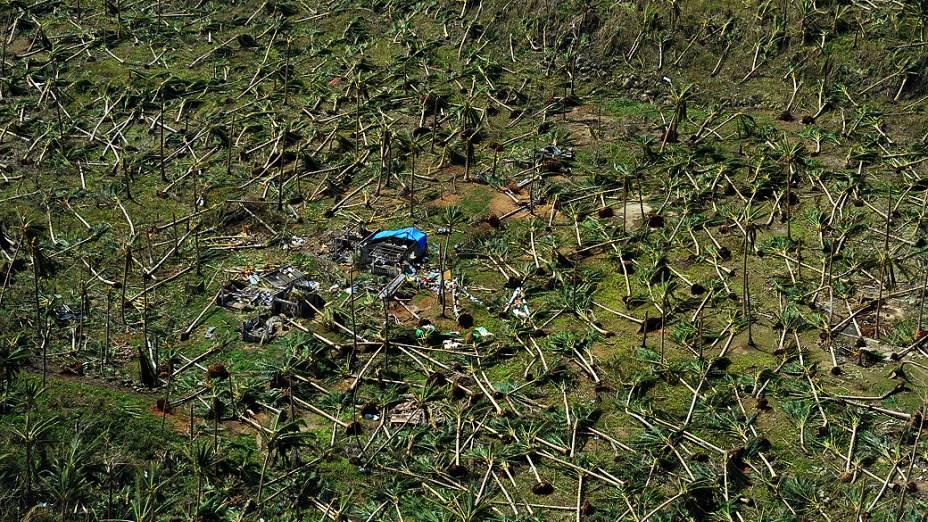 Vista aérea de coqueiros derrubados pelo tufão Haiyan, na cidade de Guiuan ( Filipinas)