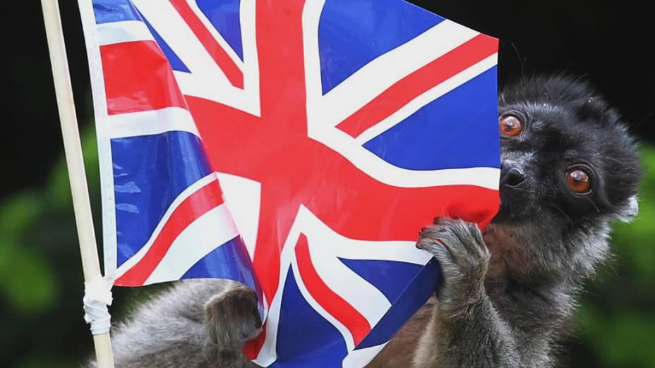 Lêmure brinca com bandeira colocada por funcionários do Blair Drummond Safari Park, perto de Stirling, na Escócia que se prepara para celebrar o jubileu de diamante da rainha Elizabeth II