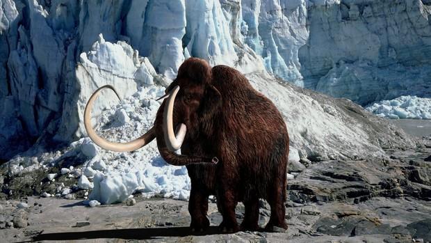 mamute-lanoso-620-original.jpeg