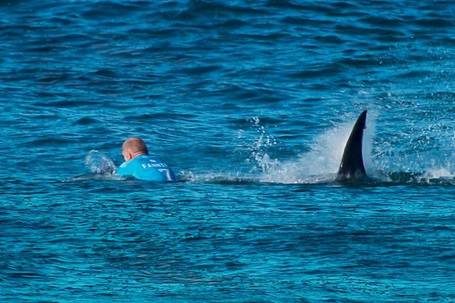 O HOMEM E O PEIXE – O australiano Mick Fanning, tricampeão mundial de surfe, atacado pelo tubarão-branco na África do Sul