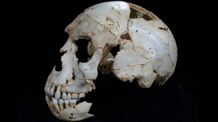 Crânio encontrado na caverna Sima de los Huesos