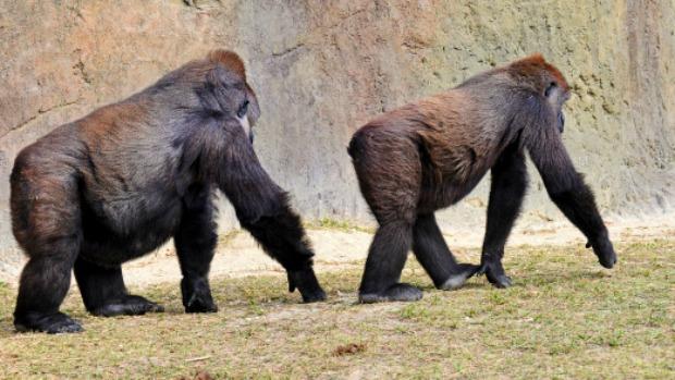 primatas-201-25-07-original.jpeg