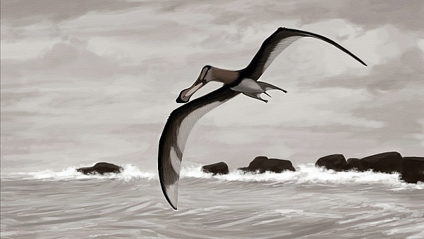 pterossauro-620-original.jpeg