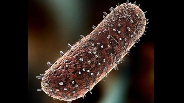 rhabdovirus-raiva-virus-20120928-original.jpeg