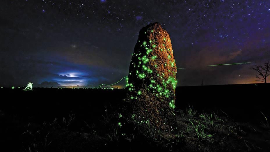 <p>Essa foto do Parque Nacional das Emas, em Goiás, mostra a bioluminescência de larvas de besouros da família Elateridae em um ninho de cupim. O fotógrafo brasileiro Ary Bassous ficou com o primeiro lugar na categoria invertebrados do concurso 'Wildlife Photographer of the Year' do Museu de História Natural de Londres e da BBC</p>