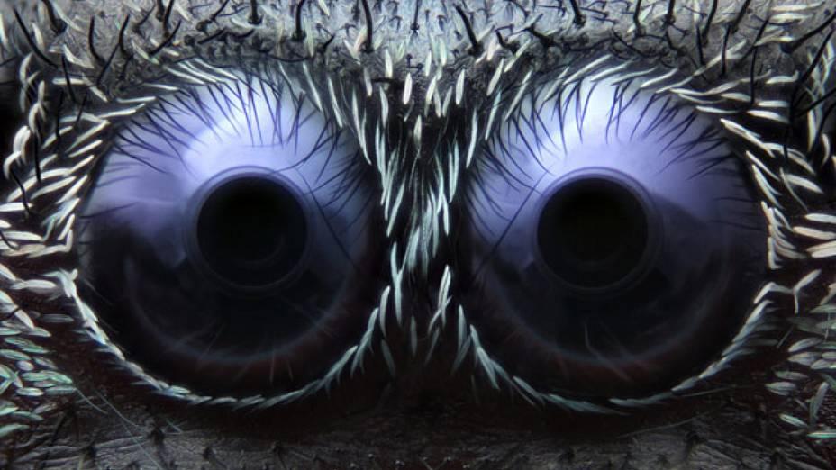 <p>Os olhos de uma aranha-saltadora (Phidippus audax) aumentados em 20 vezes ficaram com o terceiro lugar no concurso 'Nokia Small World'. A foto é do americano Noah Fram-Schwartz</p>
