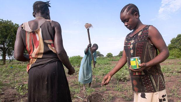 Agricultores durante plantio, no Sudão do Sul