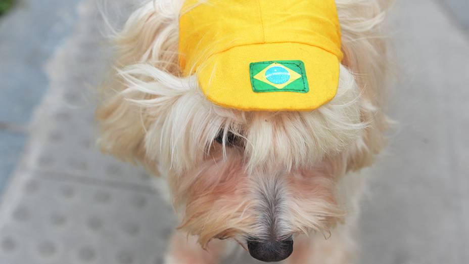 Cachorro fora do estádio do Maracanã antes da final da Copa das Confederações entre Brasil e Espanha, no Rio de Janeiro