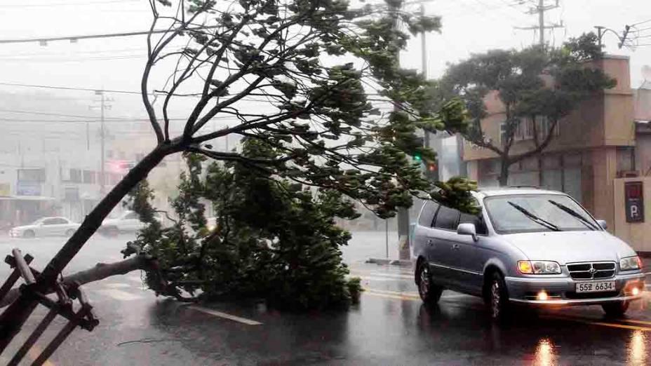 Árvore cai em rua de Yeosu, no sul de Seul, na Coreia do Sul. Os fortes ventos provocados pela passagem do tufão Bolaven derrubaram árvores, semáforos, alagaram ruas e destruíram casas