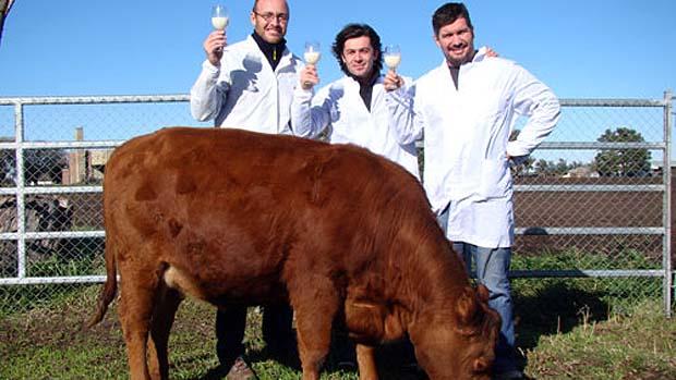 vaca-clonada-rosita-argentina-original.jpeg