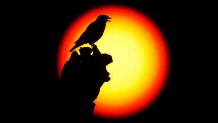 <p>Última passagem do planeta Vênus entre o Sol e a Terra no século ocorreu nesta terça-feira</p>