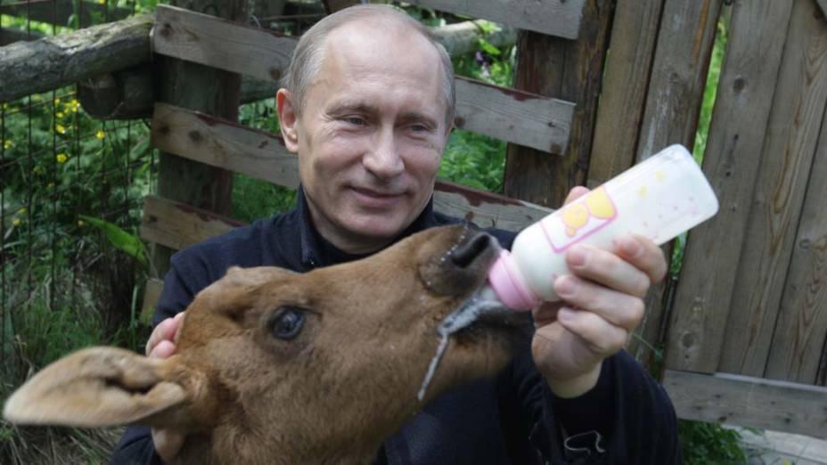 Vladimir Putin alimenta um alce durante visita ao Parque Nacional de Moscou em junho de 2010