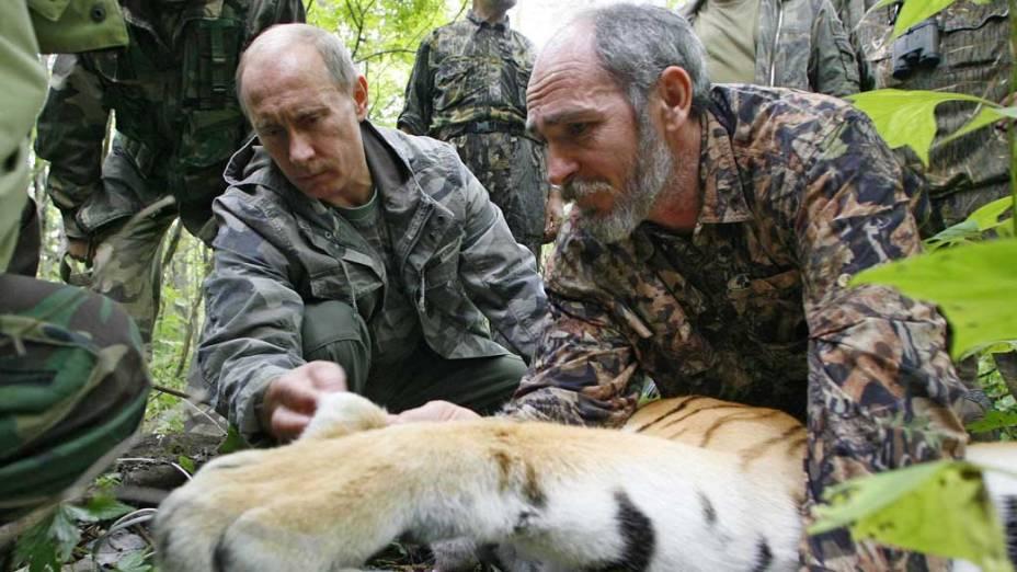 Vladimir Putin junto ao cientista Vyacheslav Razhanov colocam um transmissor de satélite GPS-Argos em um tigre, durante visita a Academia Russa de Ciências em agosto de 2008