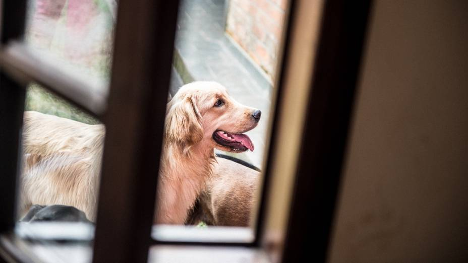 """Hotel e creche para cachorros """"Cãominhando"""", em Cotia, São Paulo"""