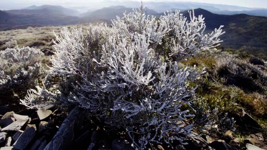 Vegetação completamente coberta de gelo no alto do Morro das Torres, cidade de Urupema, na serra de Santa Catarina